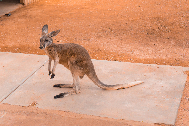 itinéraire-australie-outback